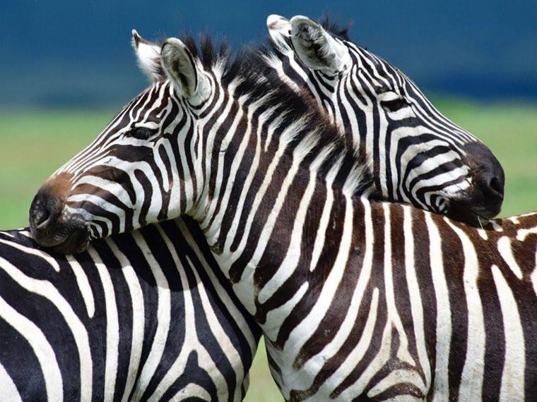8 Days - Migration Safari to Ndutu