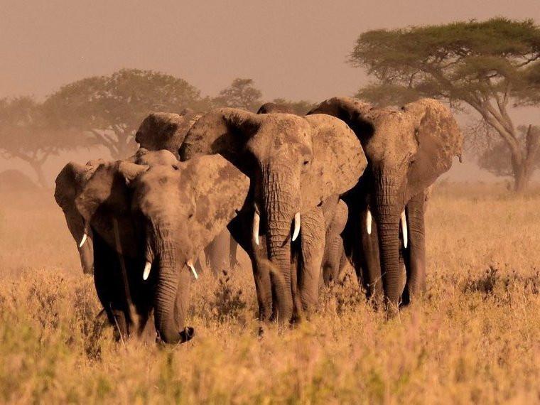 7 Days - Experience Tanzania Safari