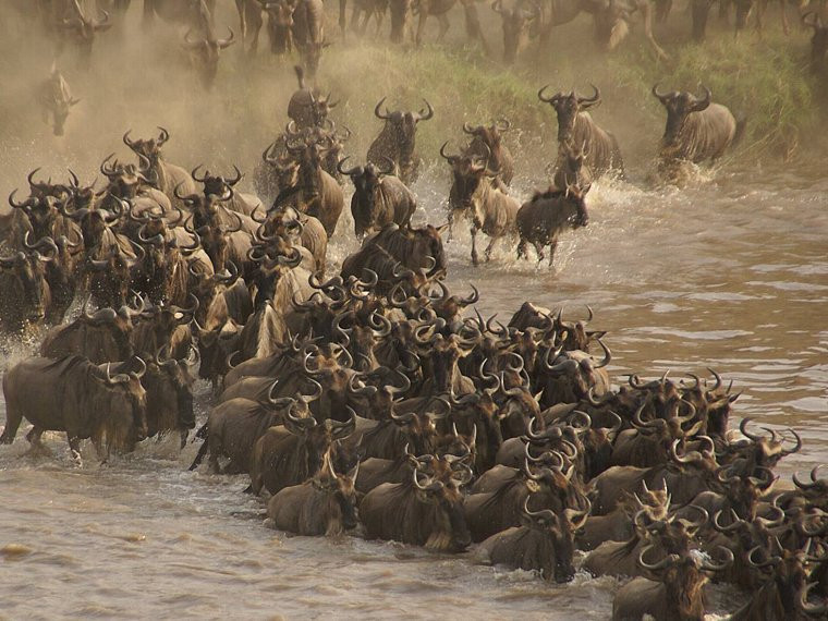 14 Days - Mara River Crossing and Photo Safari